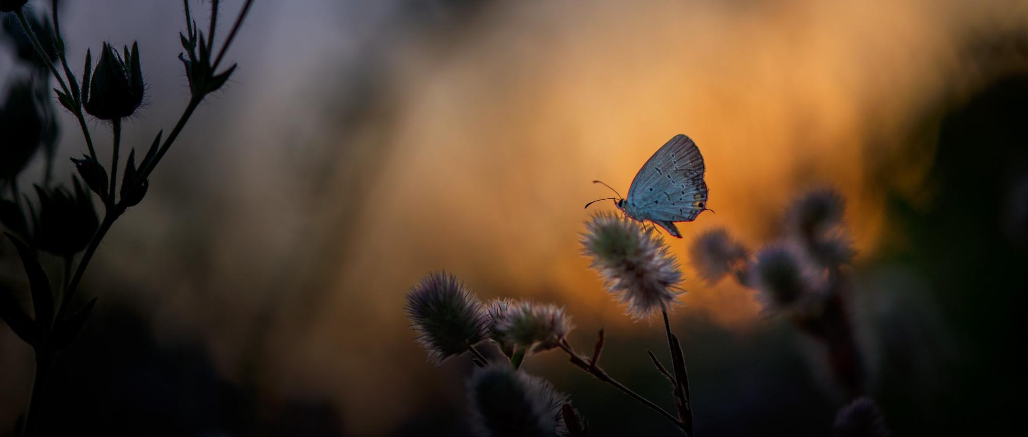 Se non cambiasse mai nulla, non ci sarebbero le farfalle.